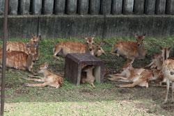 子鹿ちゃんたちの姿は、癒やされてしまいますね。