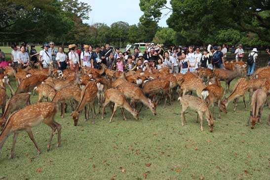9月2日 なつの鹿寄せ
