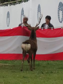 鹿の角きりが終了しました。