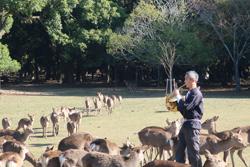 12月1日奈良の冬景~鹿寄せ~