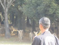 12月12日奈良の冬景~鹿寄せ~