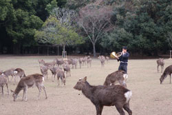 12月14日奈良の冬景~鹿寄せ~