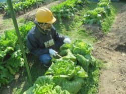 環境農園「しかちゃんファ~ム」2月10日