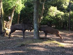 オス鹿たちが、元気に奈良公園へ帰りました。