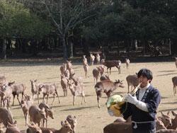 2月12日大和路キャンペ-ン「鹿寄せ」
