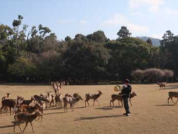 2月13日大和路キャンペ-ン「鹿寄せ」