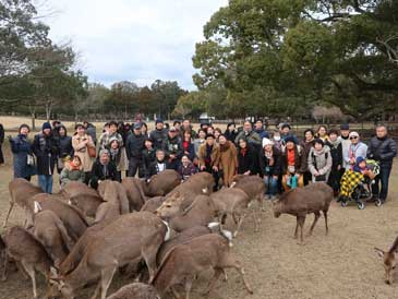 2月14日大和路キャンペ-ン「鹿寄せ」