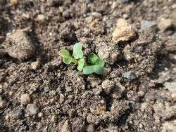 環境農園「しかちゃんファーム」4月5日