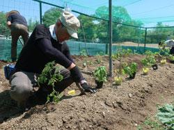 環境農園「しかちゃんファーム」5月22日