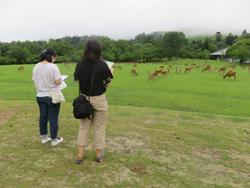 国の天然記念物「奈良のシカ」生息頭数調査7月15日・16日