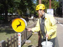11月は国の天然記念物「奈良のシカ」愛護月間です