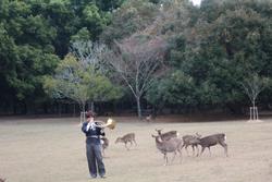 12月13日奈良の冬景~鹿寄せ~