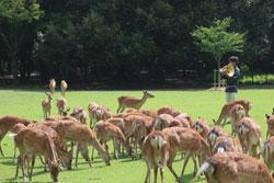 なつの鹿寄せ 7月25日